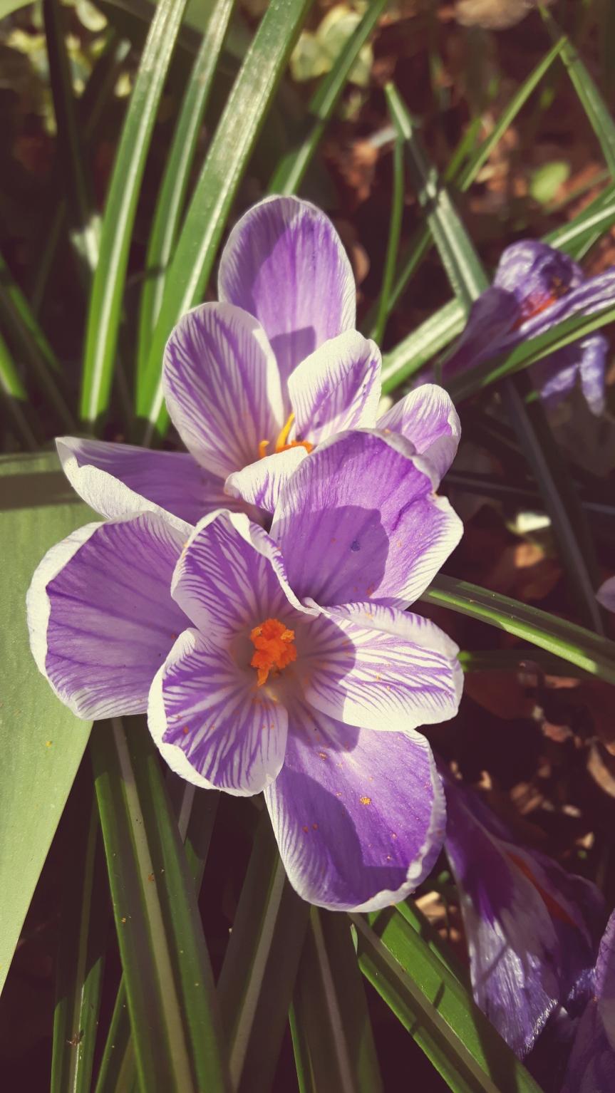 Der Frühling istda…